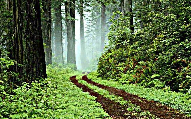 Knysna Garden Route