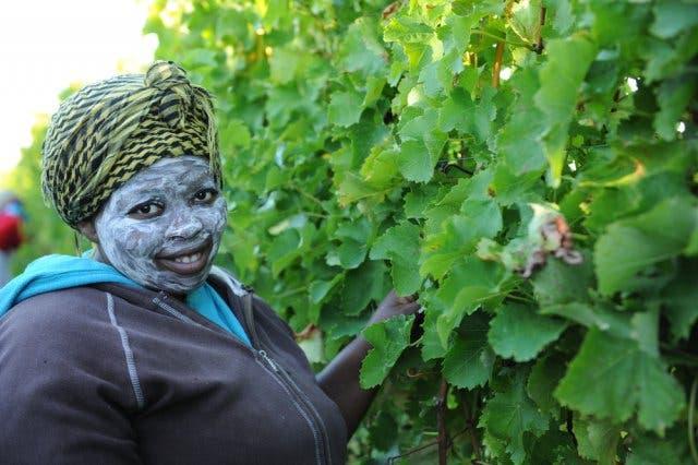 Südafrikanische Weine und Wein geschichte