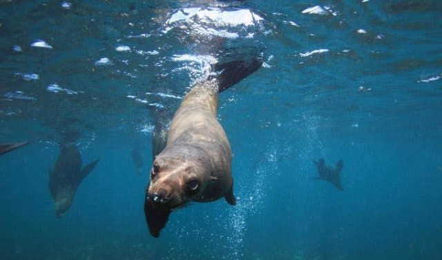 Seal Snorkeling Kapstadt