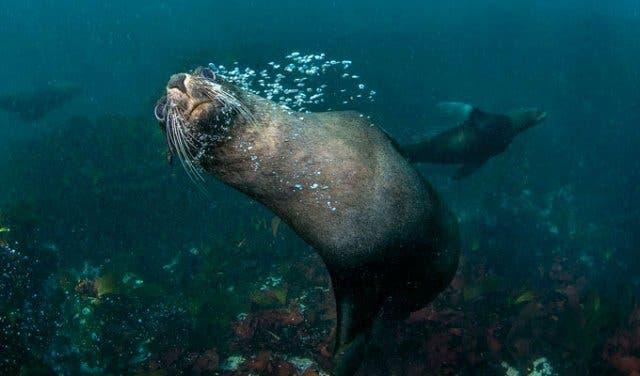 Mit Robben tauchen Kapstadt