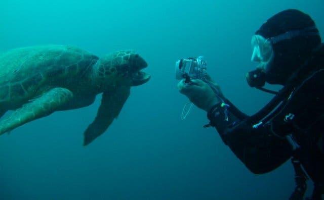 Meeresschildkröte Tofo