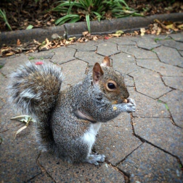 Eichhörnchen Kapstadt