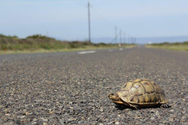 Schildkröte Kapstadt
