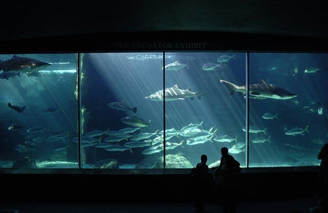 Two Oceans Aquarium Kapstadt