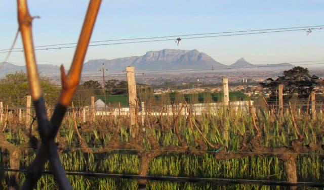 südafrikanischer Wein Kapstadt