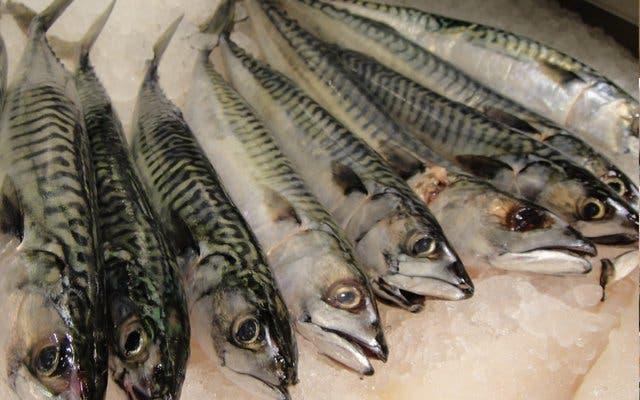 Frischer Fisch im Norden von Kapstadt