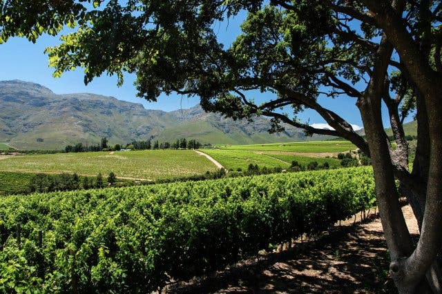 HaSkell Weinfarm Stellenbosch 3