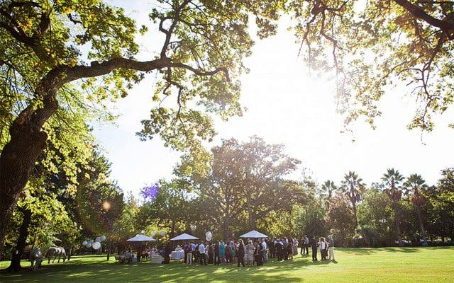 Wedding Stellenbosch
