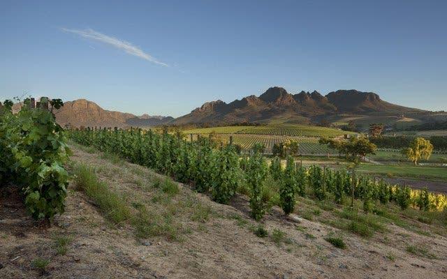Weinland Kapstadt erkunden
