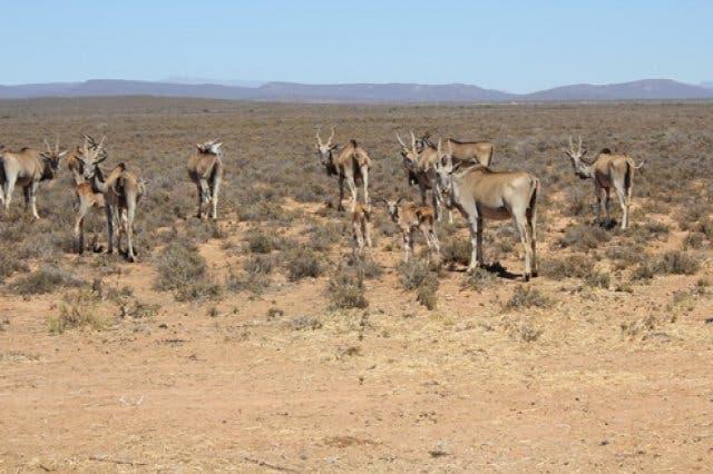 Safari Njalo Njalo