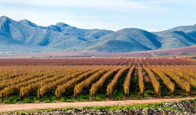 Wein Südafrika