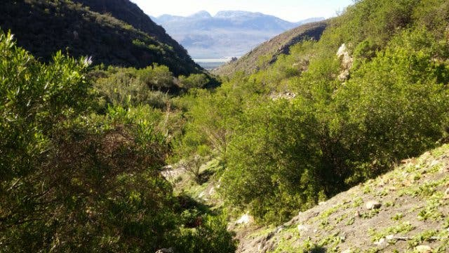 Cederberg Südafrika
