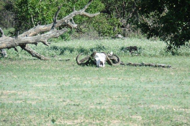 Safari Krüger Park