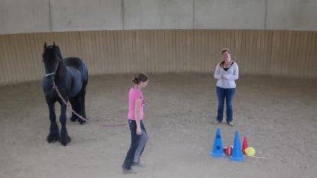 Julia Stern Horse Coach