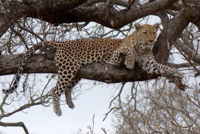Wildlife Südafrika