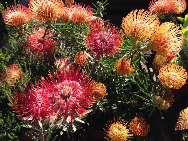 Erhole dich im botanischen Garten Stellenbosch