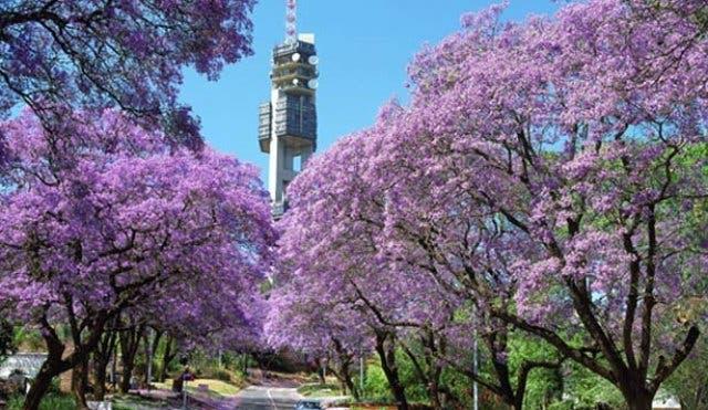 Hauptstadt Südafrika - 3 Hauptstädte in einem Land