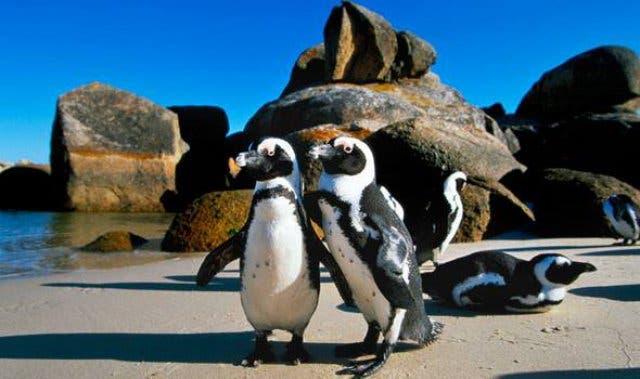 Pinguine Kapstadt