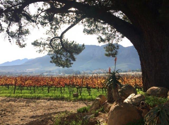 HaSkell Weinfarm Stellenbosch