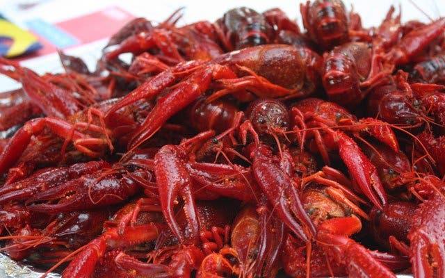 Crayfish Elands Bay