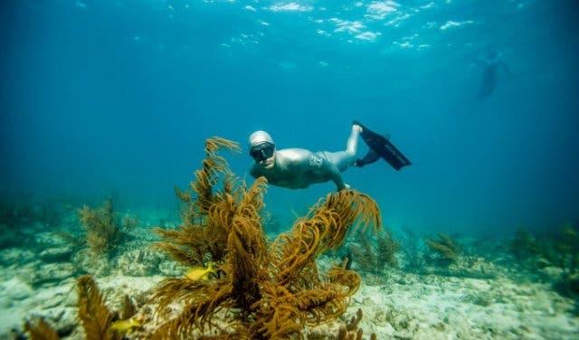 Tauchen in Kapstadt mit Ocean Experience