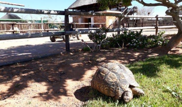 Schildkröte Njalo Njalo