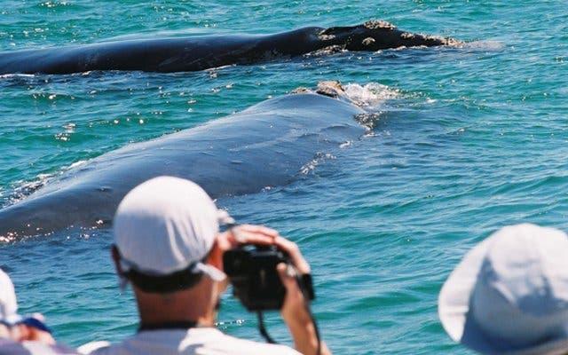 Wale beobachten in Kapstadt