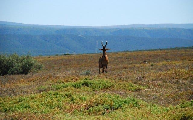 Safari auf der Garden Route Südafrika