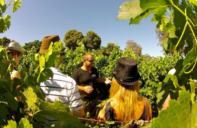 Wine Flies Tour Kapstadt 1