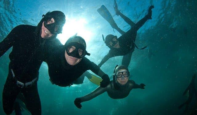 Schnorcheln mit Seehunden