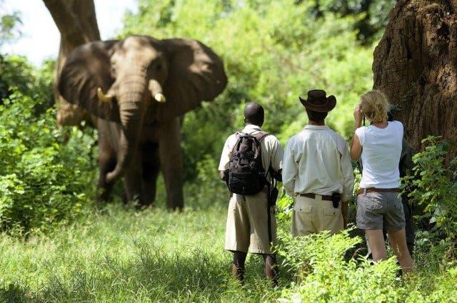 Addo Elephant Park Garden Route Südafrika