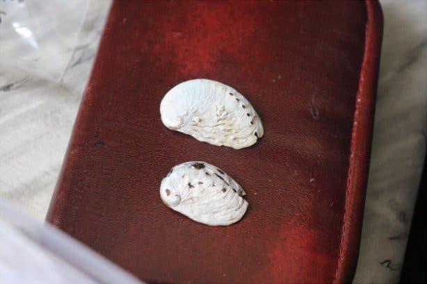 Muscheln an denen man die Ozeanversauerung erkennen kann