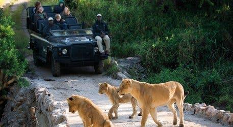 Safari Kapstadt